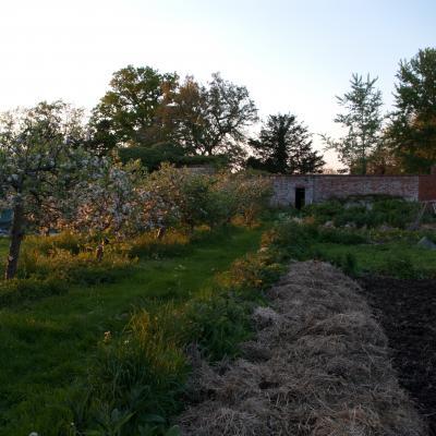 The vegtable garden.