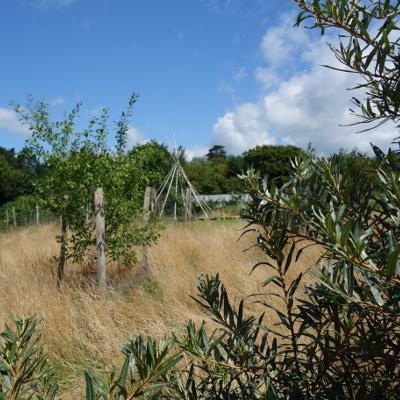 Hoathly Hill Forest Garden
