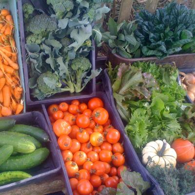 Hoathly Hill Community Supported Agriculture