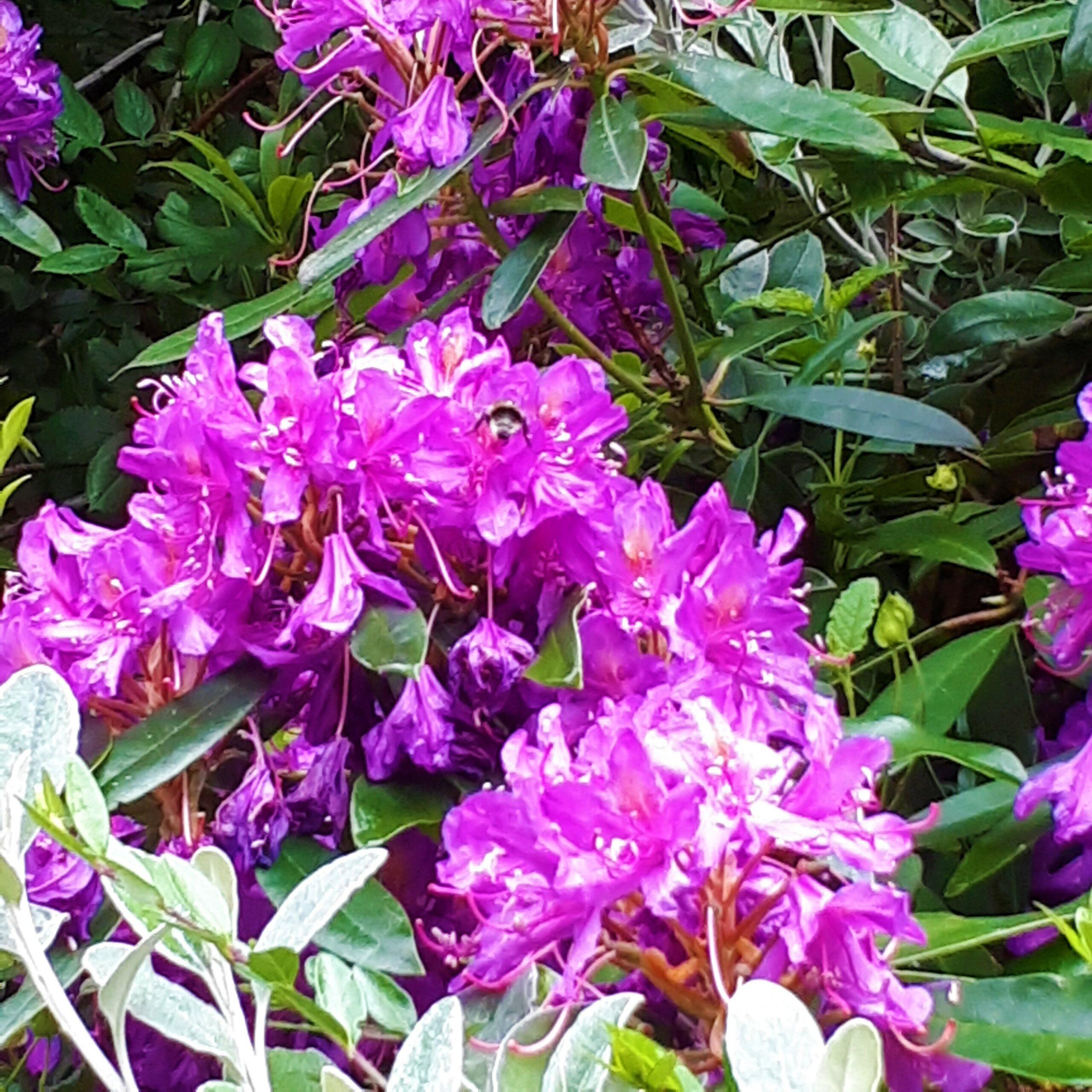 13 Spring colour