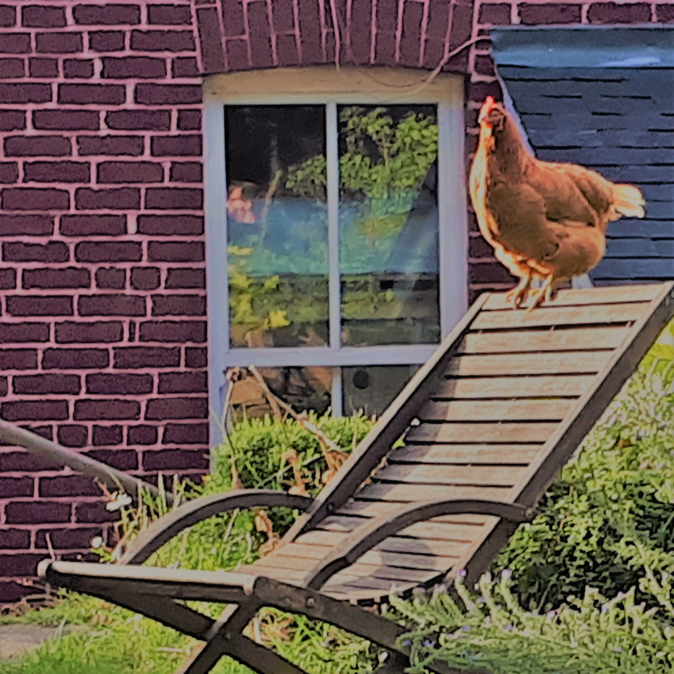 17. Chicken ruling the roost